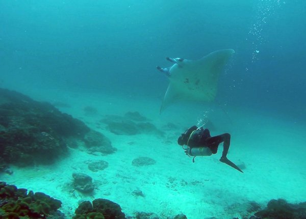 Diving in Nusa Penida with Mantas and Molas